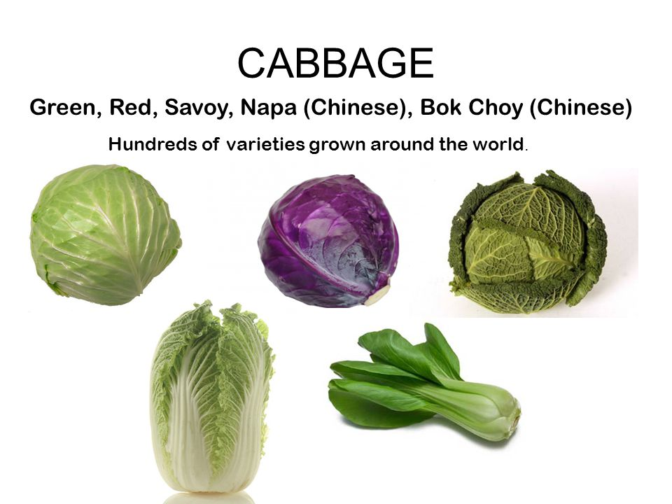 CABBAGE Green, Red, Savoy, Napa (Chinese), Bok Choy (Chinese) Hundreds of varieties grown around the world.