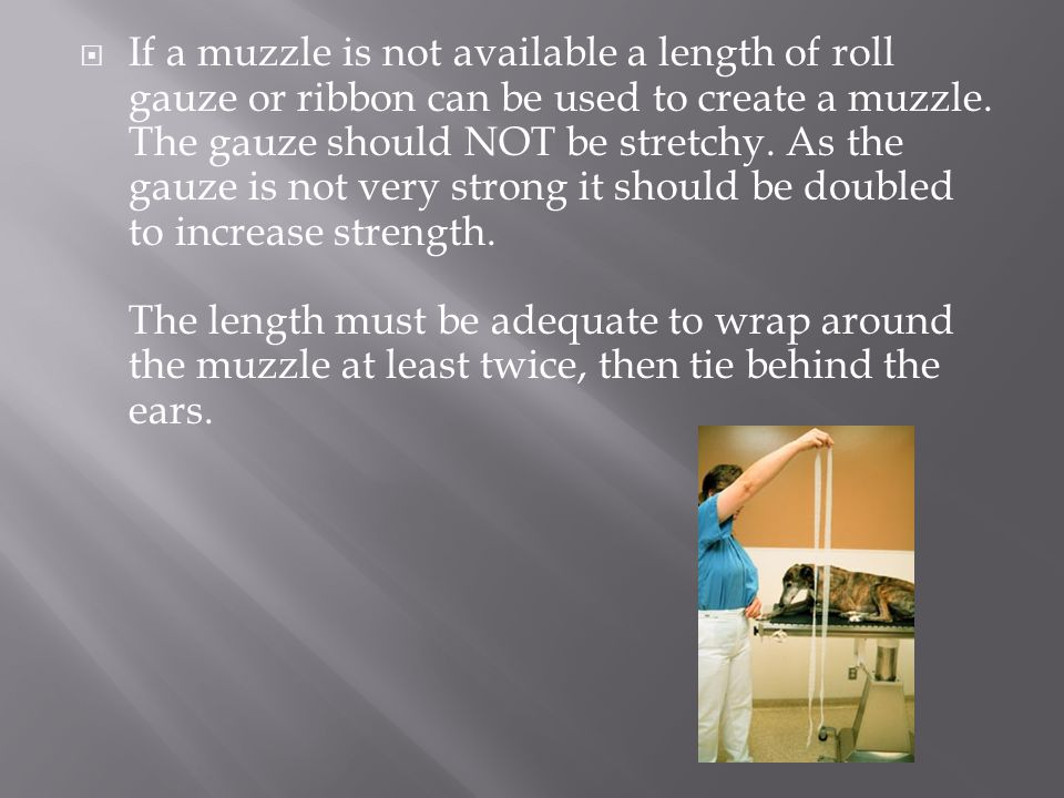  If a muzzle is not available a length of roll gauze or ribbon can be used to create a muzzle. The gauze should NOT be stretchy. As the gauze is not