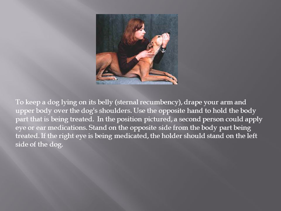 To keep a dog lying on its belly (sternal recumbency), drape your arm and upper body over the dog's shoulders. Use the opposite hand to hold the body