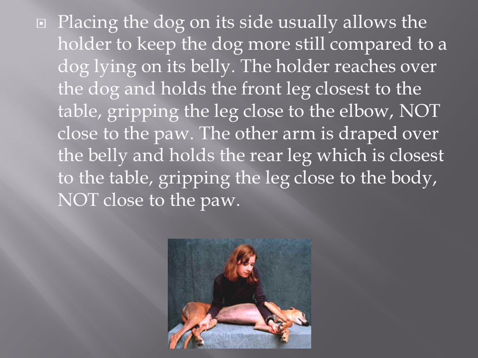  Placing the dog on its side usually allows the holder to keep the dog more still compared to a dog lying on its belly. The holder reaches over the d