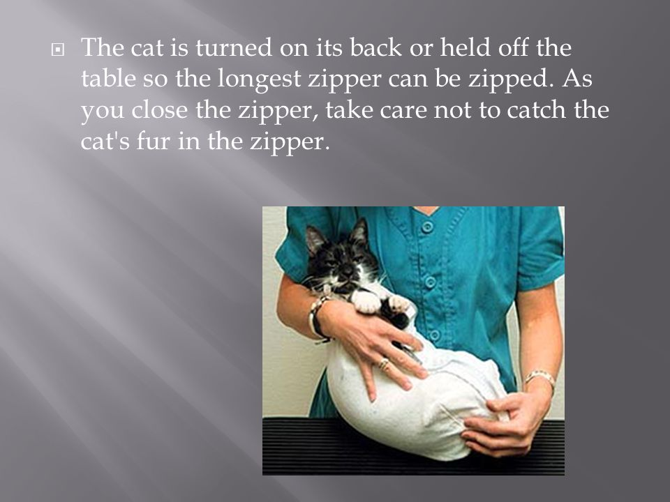  The cat is turned on its back or held off the table so the longest zipper can be zipped. As you close the zipper, take care not to catch the cat's f