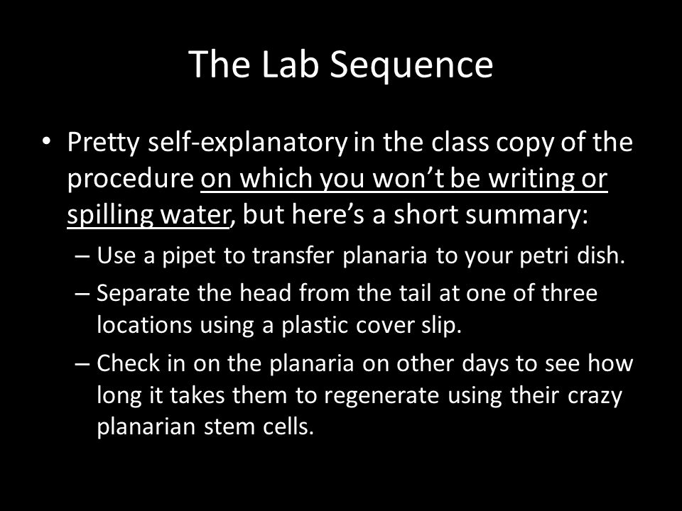 The Lab Sequence Pretty self-explanatory in the class copy of the procedure on which you won't be writing or spilling water, but here's a short summary: – Use a pipet to transfer planaria to your petri dish.