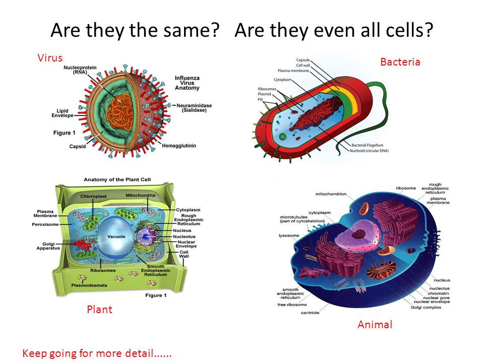 Are they the same. Are they even all cells.