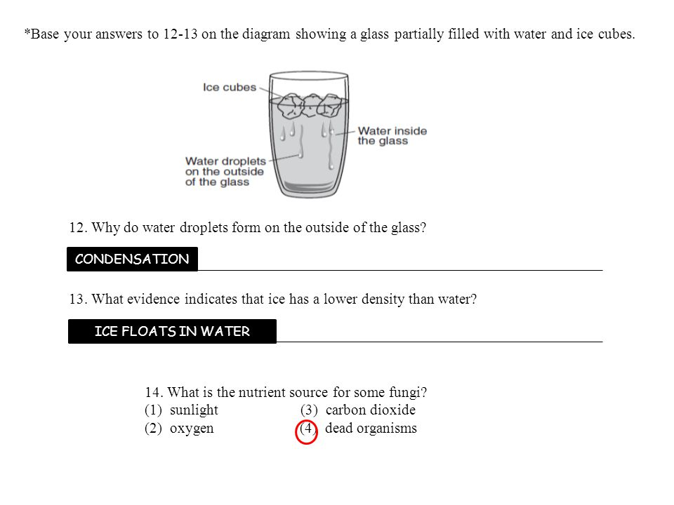 39.The beaker shown below contains four liquids of different densities.