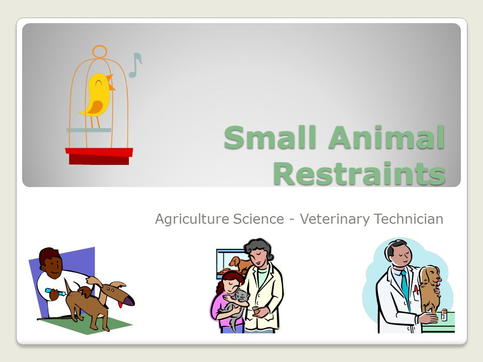 Small Animal Restraints Agriculture Science - Veterinary Technician