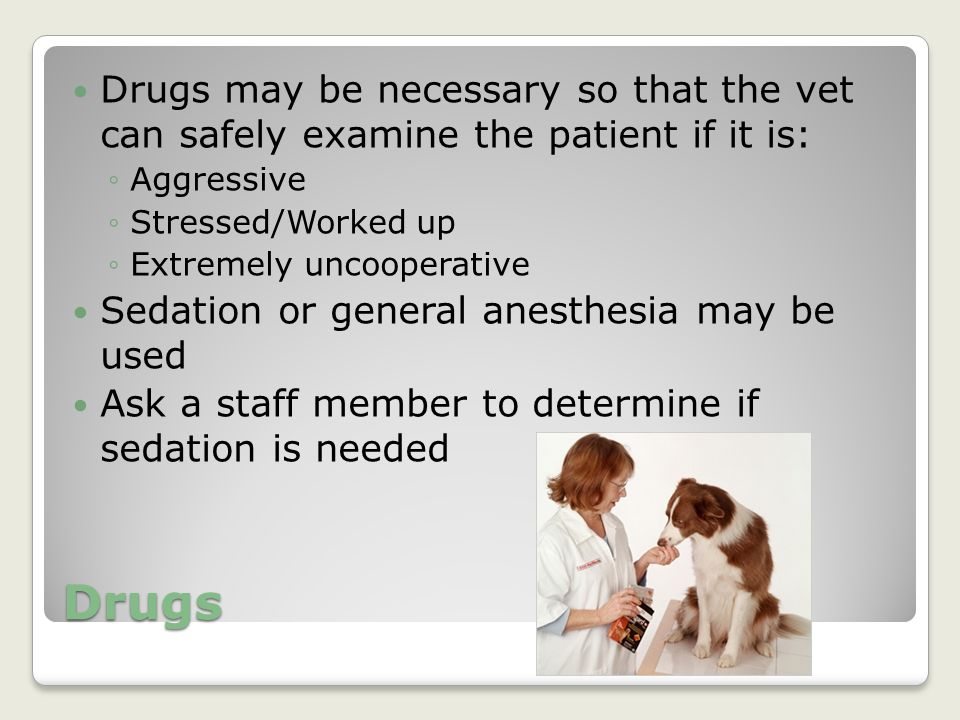 Drugs Drugs may be necessary so that the vet can safely examine the patient if it is: ◦Aggressive ◦Stressed/Worked up ◦Extremely uncooperative Sedatio