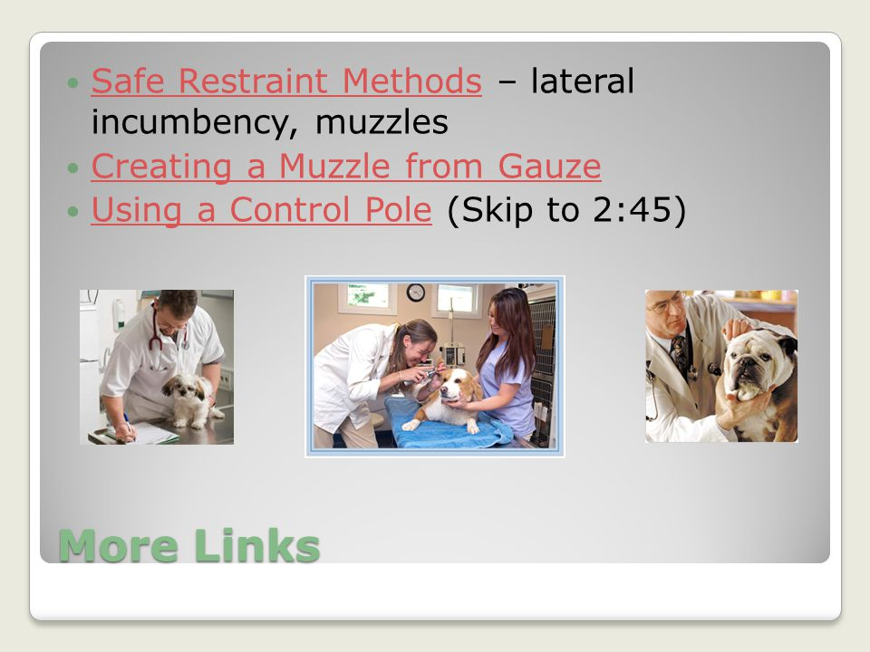 More Links Safe Restraint Methods – lateral incumbency, muzzles Safe Restraint Methods Creating a Muzzle from Gauze Using a Control Pole (Skip to 2:45
