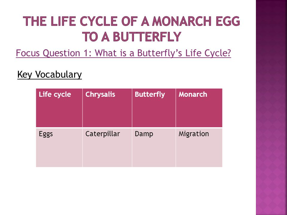 Focus Question 1: What is a Butterfly's Life Cycle.