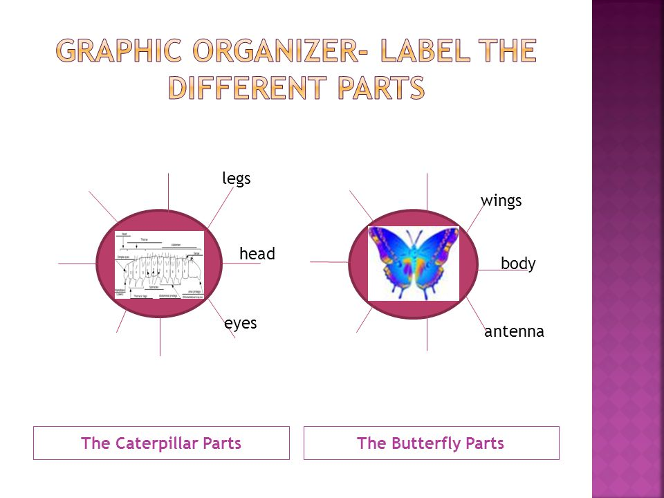 The Caterpillar PartsThe Butterfly Parts wings body antenna head eyes legs