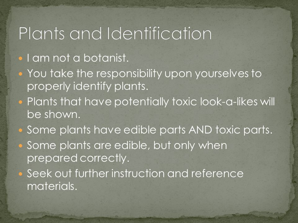 I am not a botanist.You take the responsibility upon yourselves to properly identify plants.