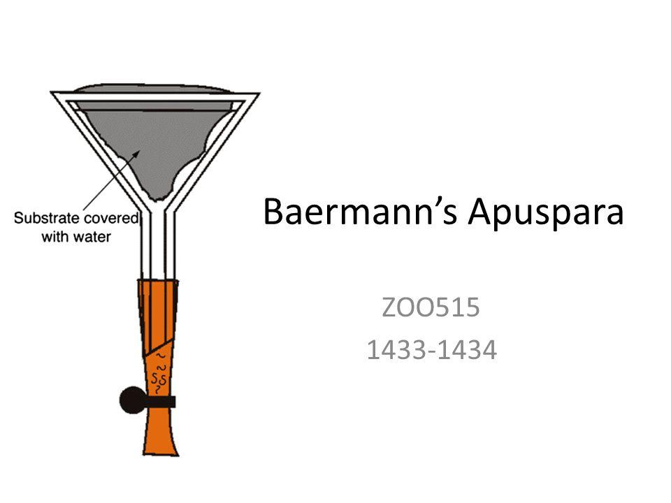 Baermann's Apuspara ZOO515 1433-1434