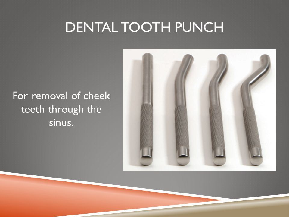 DENTAL TOOTH PUNCH For removal of cheek teeth through the sinus.