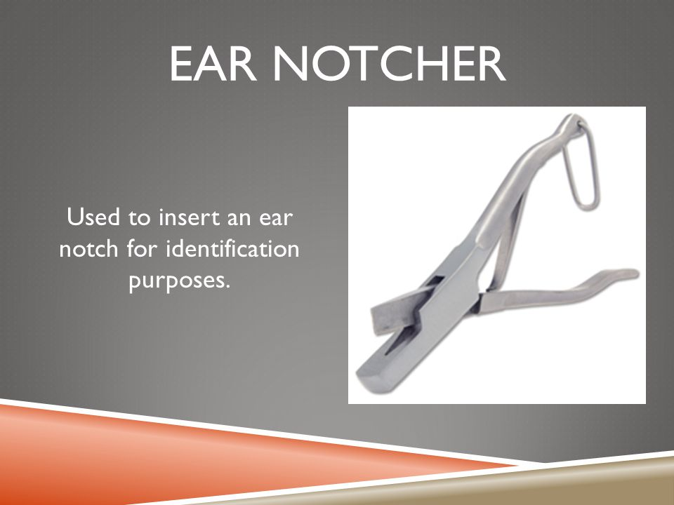 EAR NOTCHER Used to insert an ear notch for identification purposes.