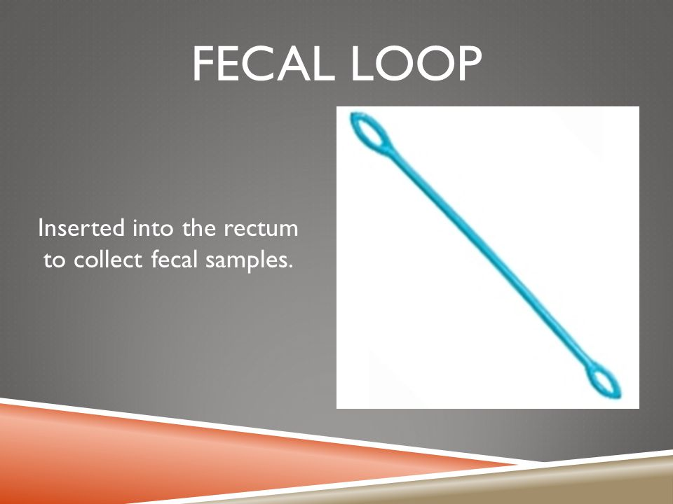 FECAL LOOP Inserted into the rectum to collect fecal samples.