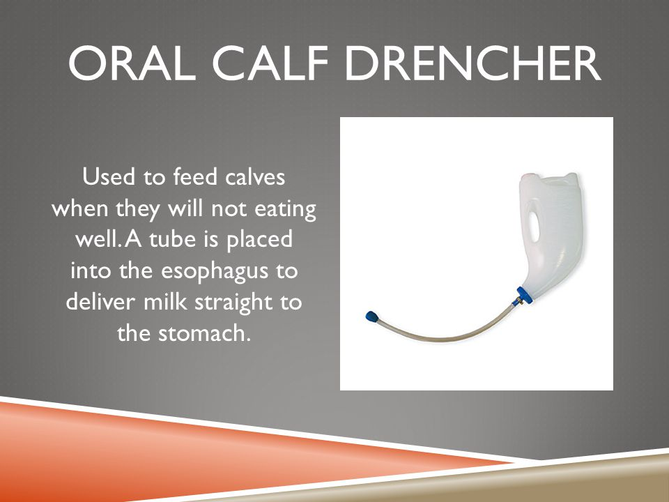 ORAL CALF DRENCHER Used to feed calves when they will not eating well. A tube is placed into the esophagus to deliver milk straight to the stomach.