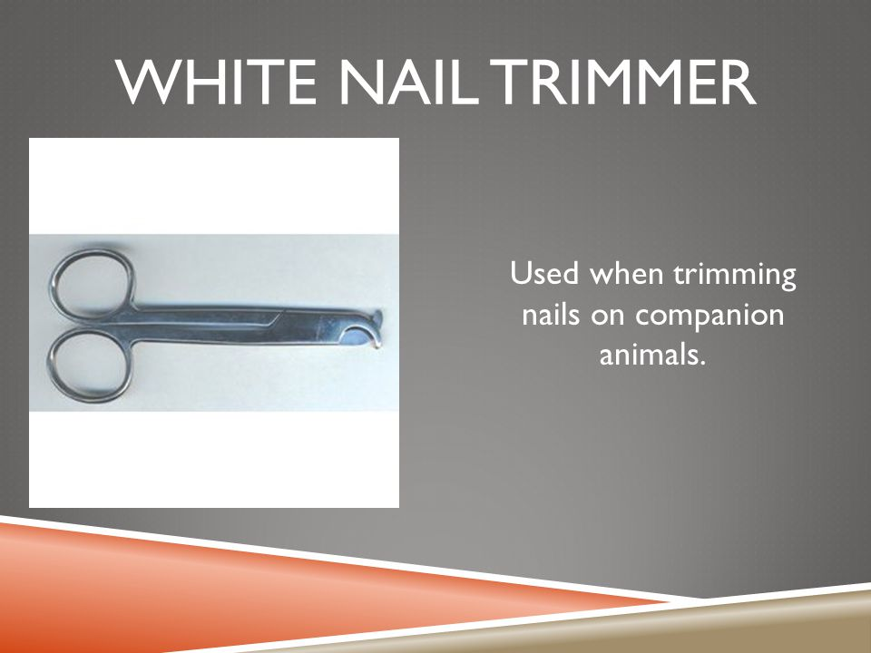 WHITE NAIL TRIMMER Used when trimming nails on companion animals.