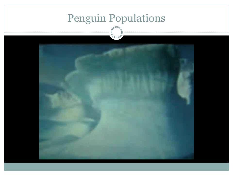 Penguins are Melting