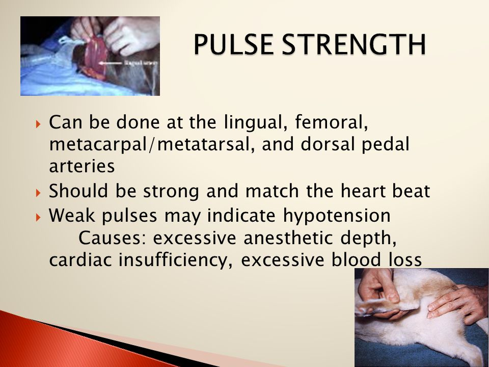  Can be done at the lingual, femoral, metacarpal/metatarsal, and dorsal pedal arteries  Should be strong and match the heart beat  Weak pulses may