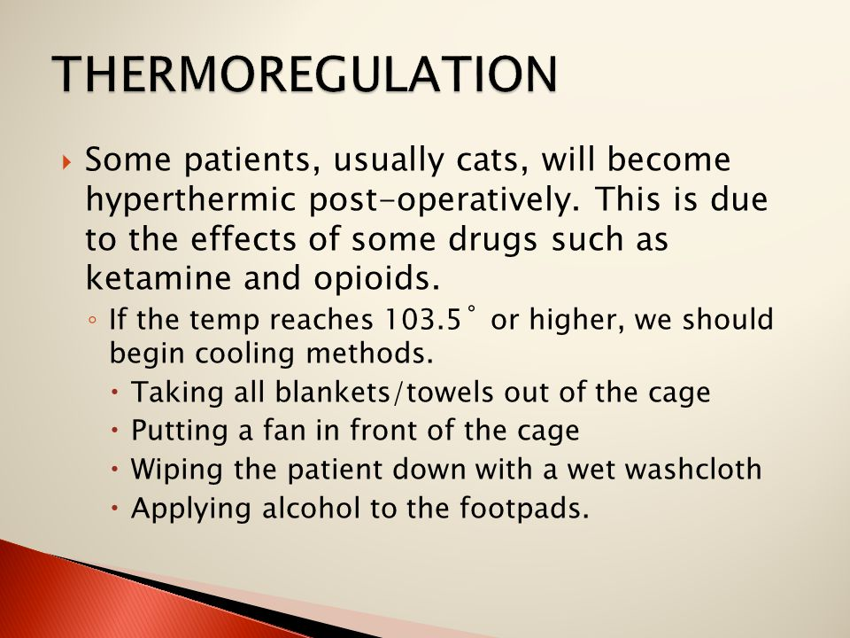  Some patients, usually cats, will become hyperthermic post-operatively. This is due to the effects of some drugs such as ketamine and opioids. ◦ If