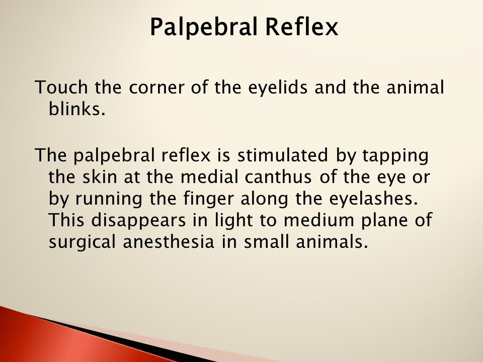 Palpebral Reflex Touch the corner of the eyelids and the animal blinks.