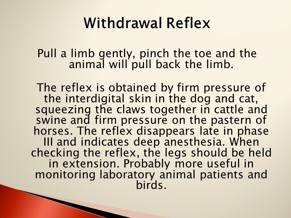 Withdrawal Reflex Pull a limb gently, pinch the toe and the animal will pull back the limb. The reflex is obtained by firm pressure of the interdigita