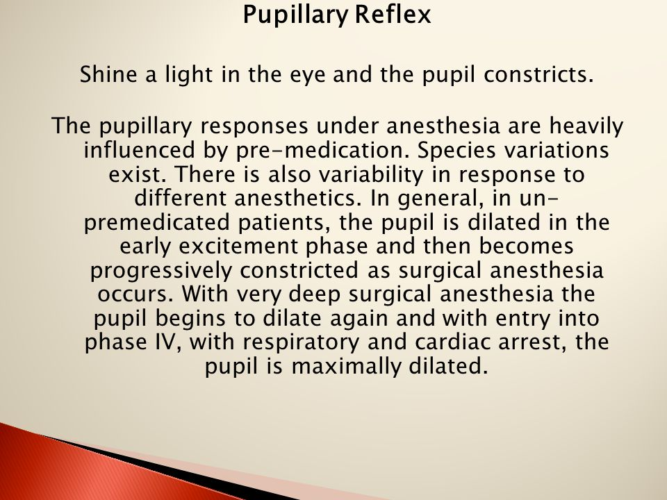 Pupillary Reflex Shine a light in the eye and the pupil constricts. The pupillary responses under anesthesia are heavily influenced by pre-medication.