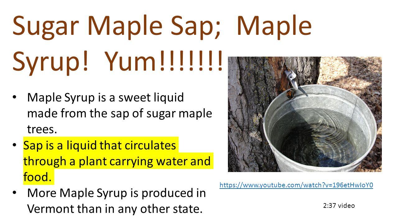 https://www.youtube.com/watch?v=196etHwIoY0 2:37 video Sugar Maple Sap; Maple Syrup.