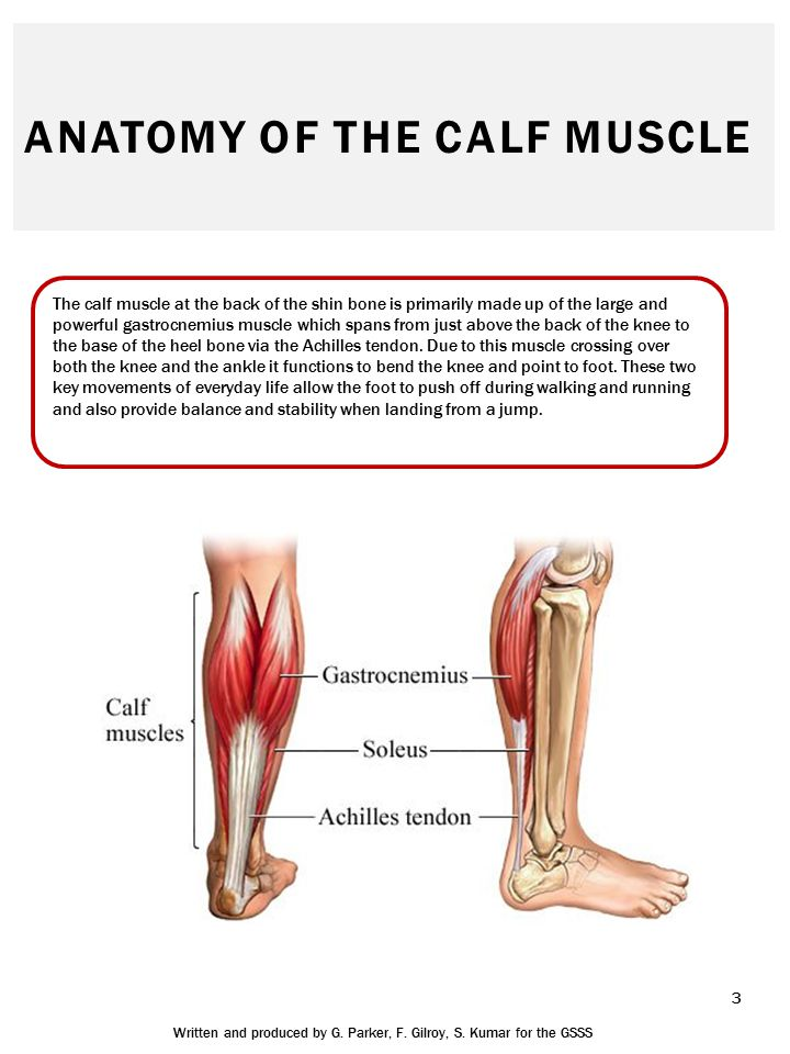 HOW DO YOU INJURE YOUR CALF MUSCLE.