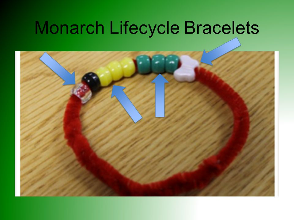 Monarch Lifecycle Bracelets