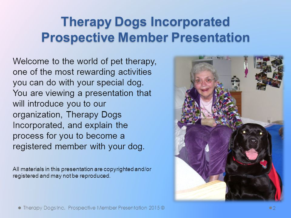 What Is Pet Therapy.What Is Pet Therapy.