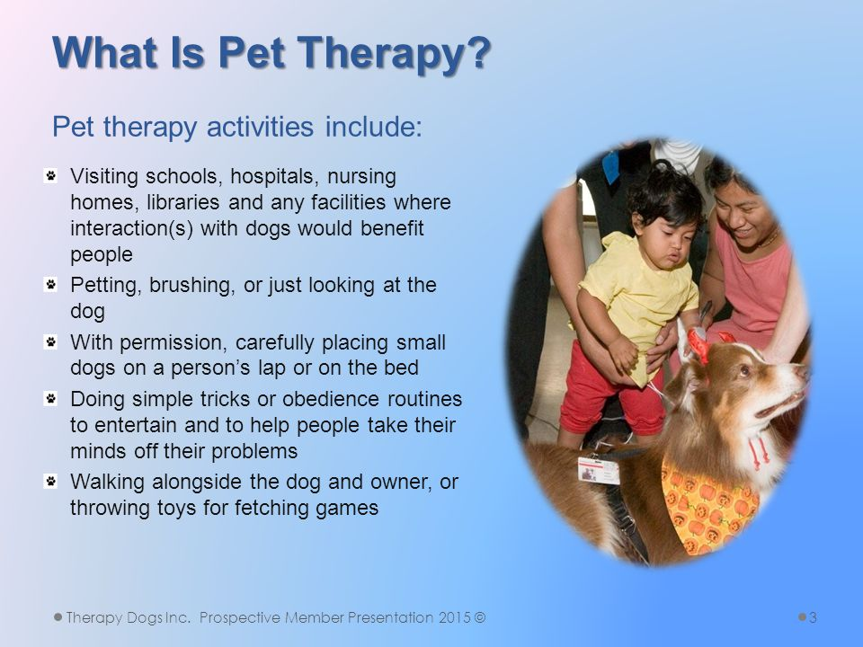 What Is Pet Therapy. What Is Pet Therapy.