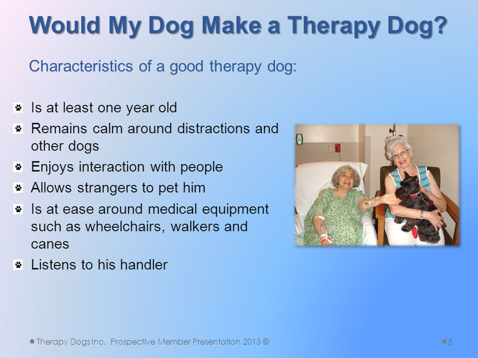 More Therapy Fun Therapy Dogs Inc. Prospective Member Presentation 2015 ©16