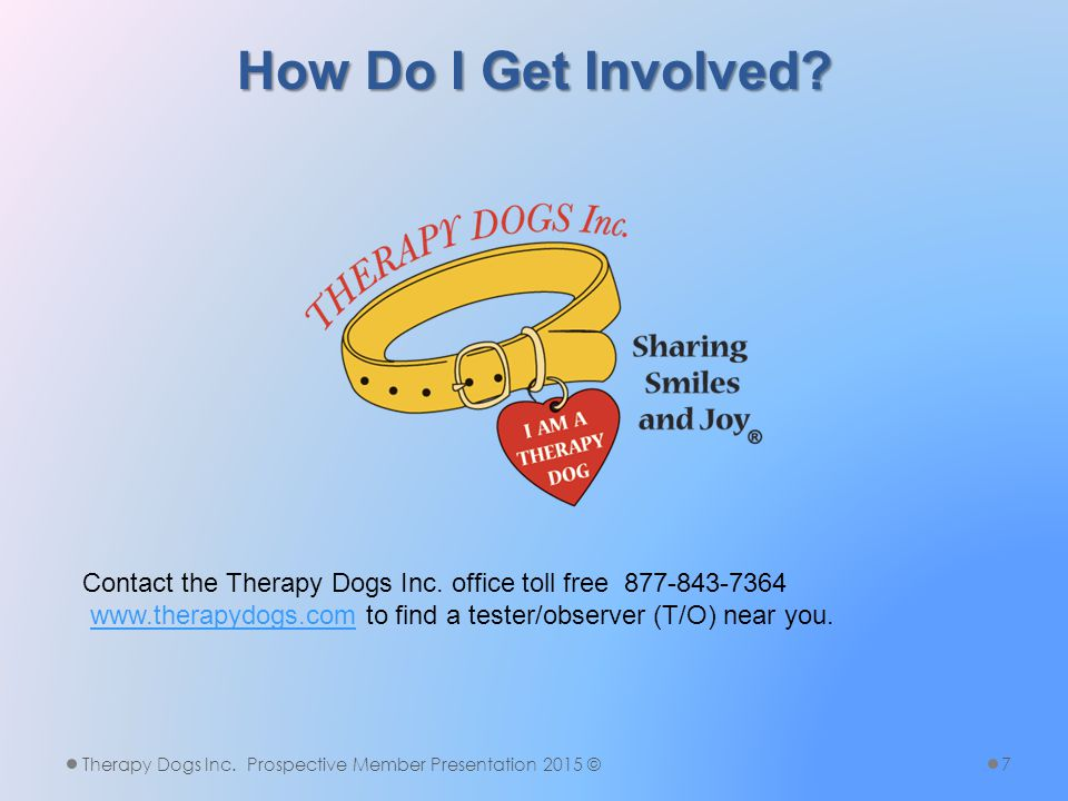 Does A Therapy Dog Have To Be A Purebred.