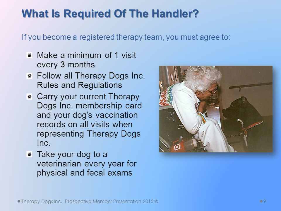 What is the Testing Process.The prospective member contacts a T/O to arrange a Therapy Dogs Inc.