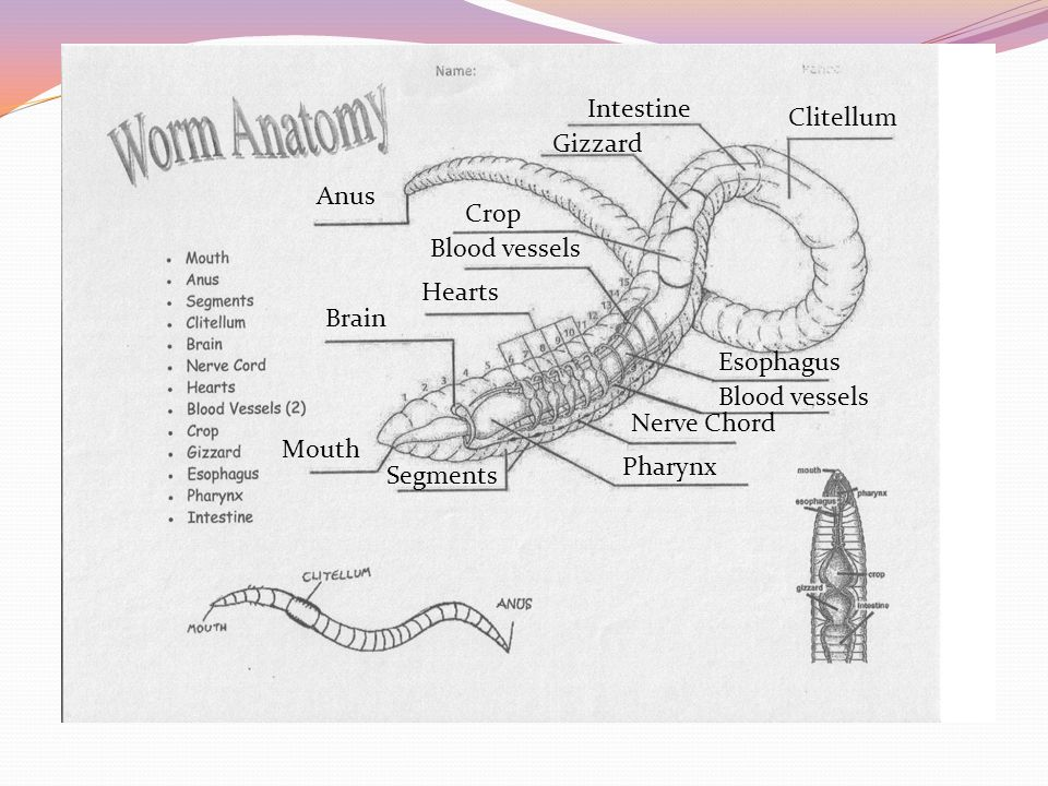 Describe how each of these features help earthworms move through the dirt.