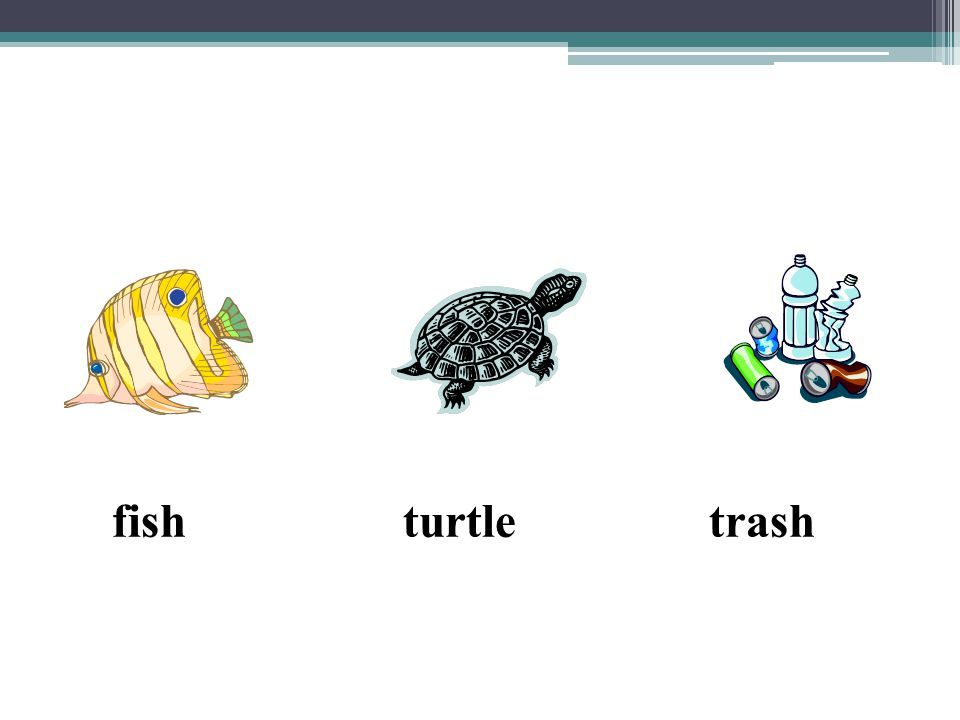 fish turtle trash