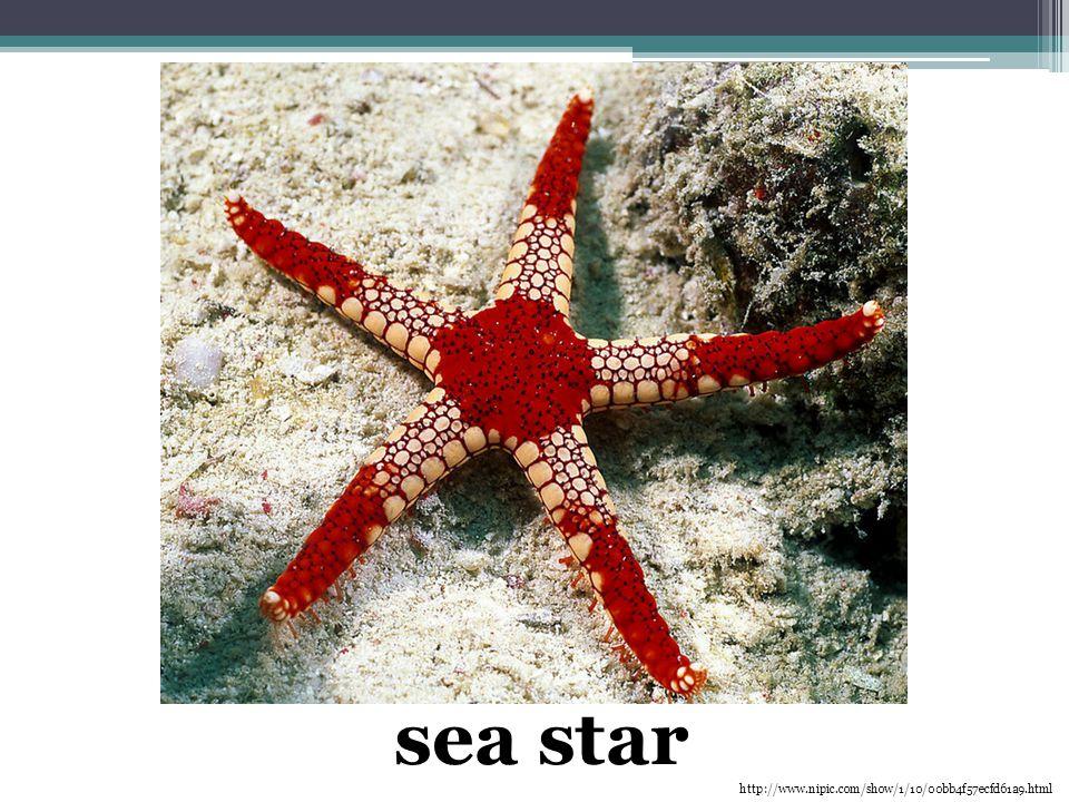 sea star http://www.nipic.com/show/1/10/00bb4f57ecfd61a9.html