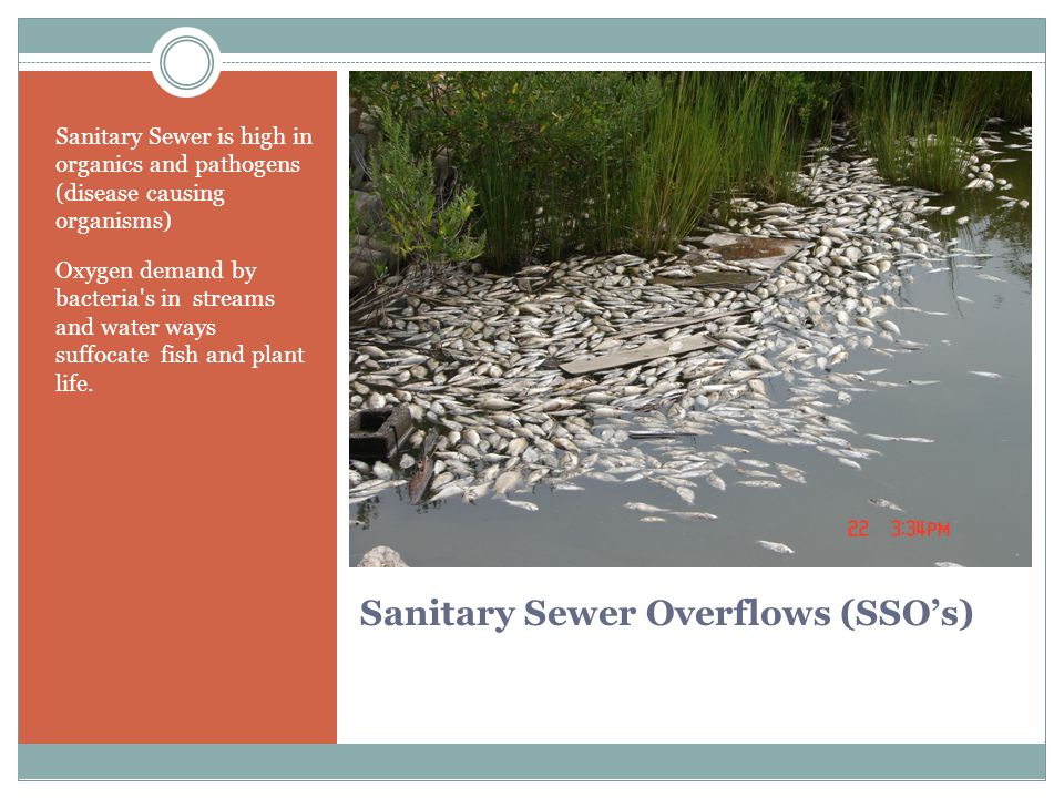 Sanitary Sewer Overflows (SSO's) Sanitary Sewer is high in organics and pathogens (disease causing organisms) Oxygen demand by bacteria s in streams and water ways suffocate fish and plant life.