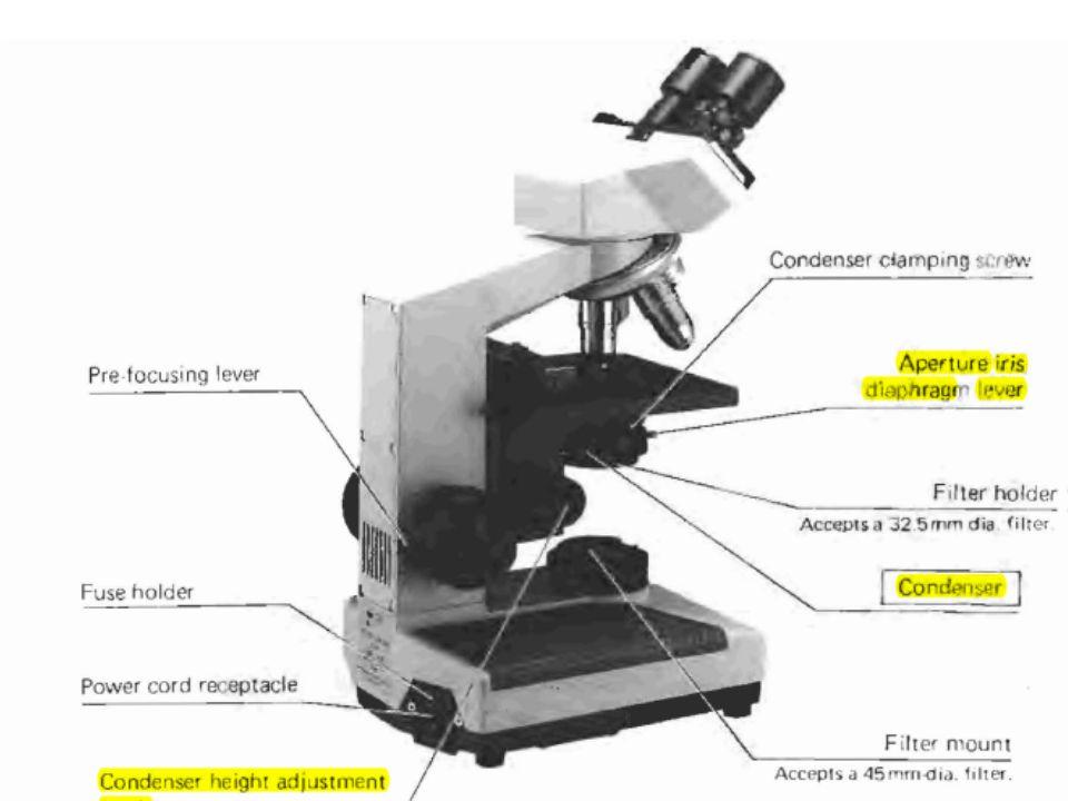 Olympus CH-2 microscope