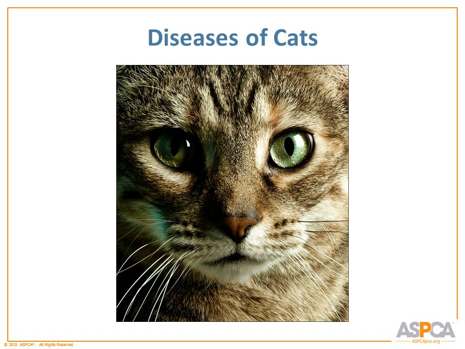 © 2011 ASPCA ®. All Rights Reserved.© 2012 ASPCA ®. All Rights Reserved. Diseases of Cats