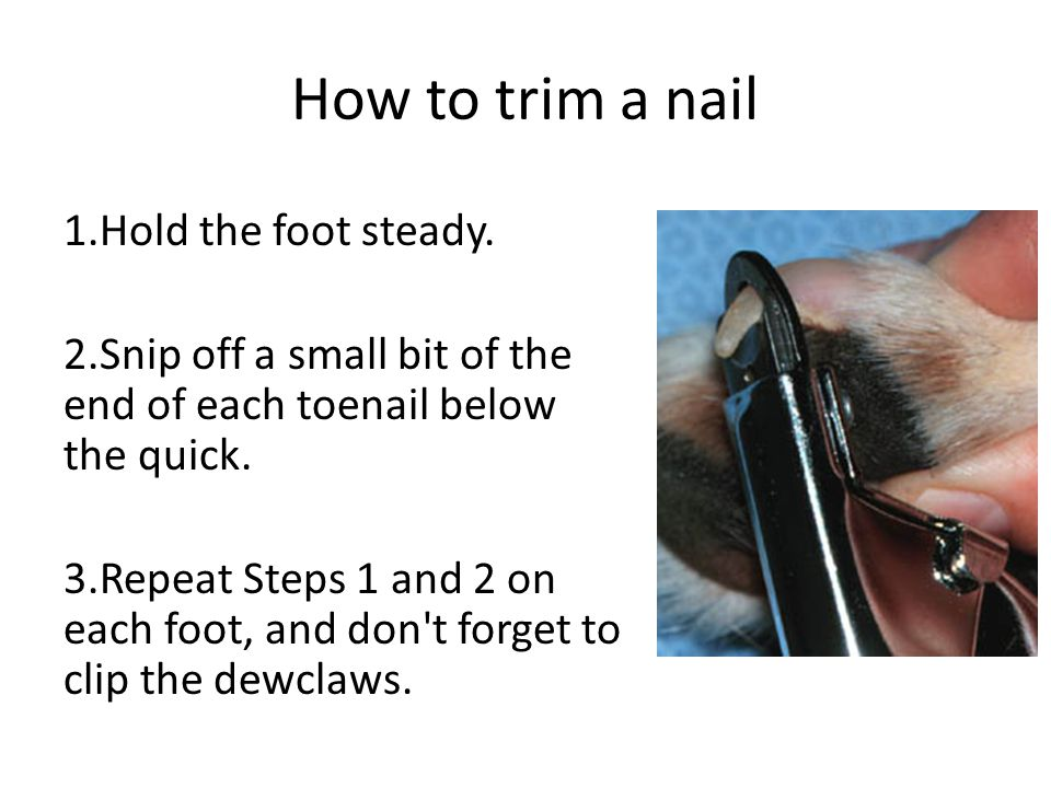 How to trim a nail 1.Hold the foot steady.