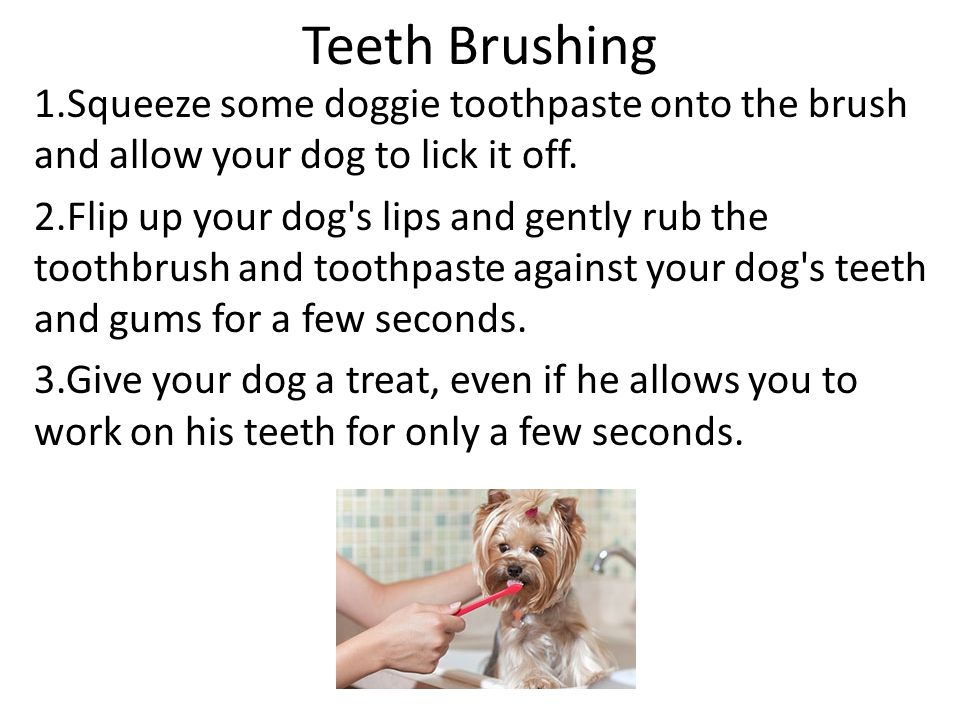 Teeth Brushing 1.Squeeze some doggie toothpaste onto the brush and allow your dog to lick it off.