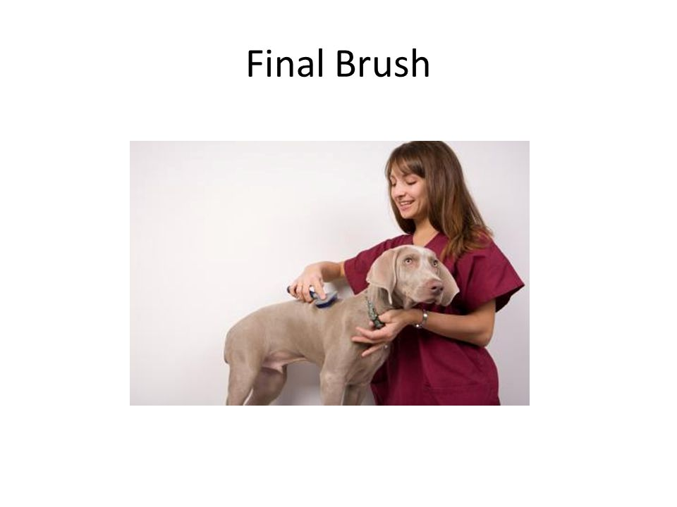 Final Brush