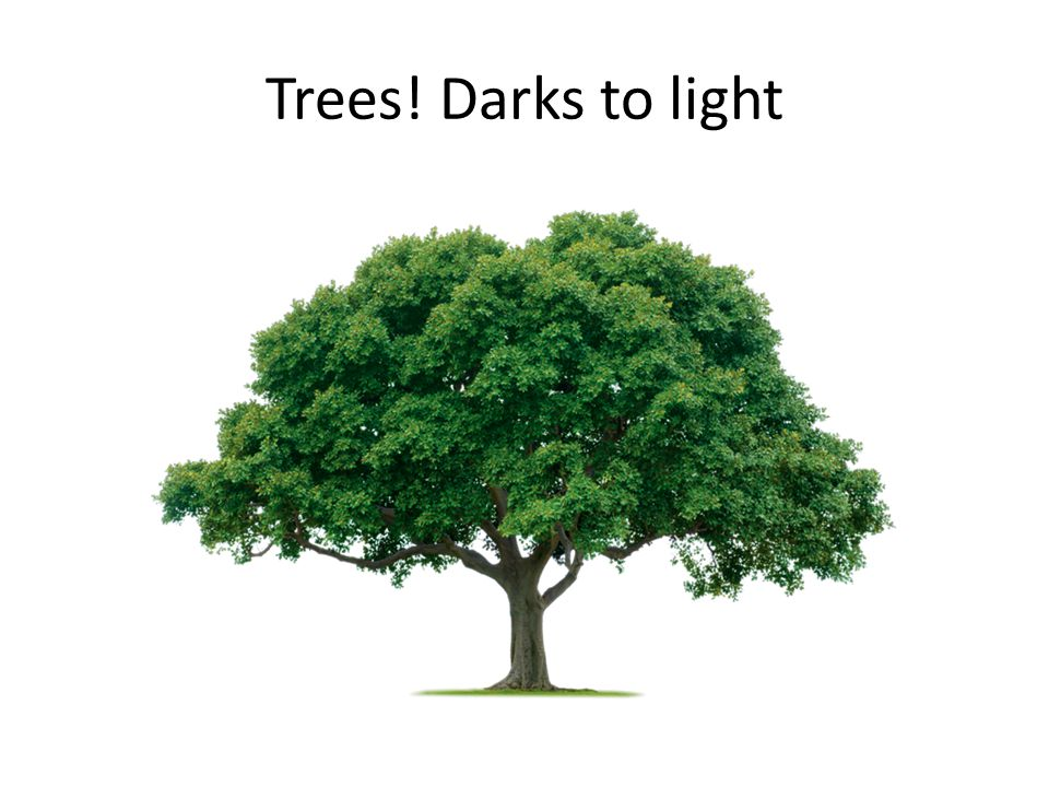 Trees! Darks to light
