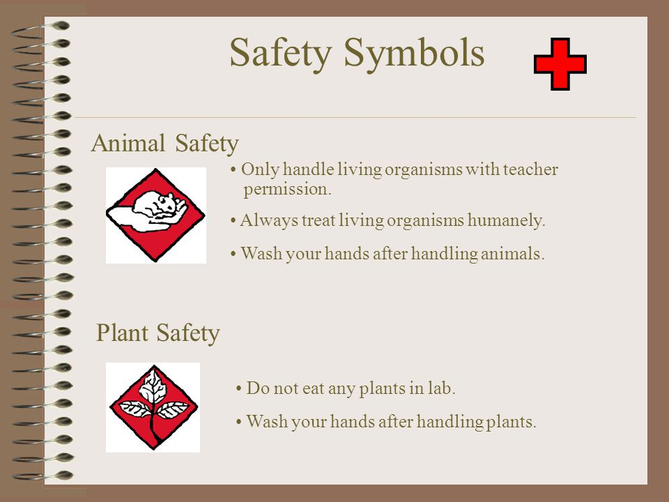 Plant Safety Do not eat any plants in lab. Wash your hands after handling plants. Safety Symbols Animal Safety Only handle living organisms with teach