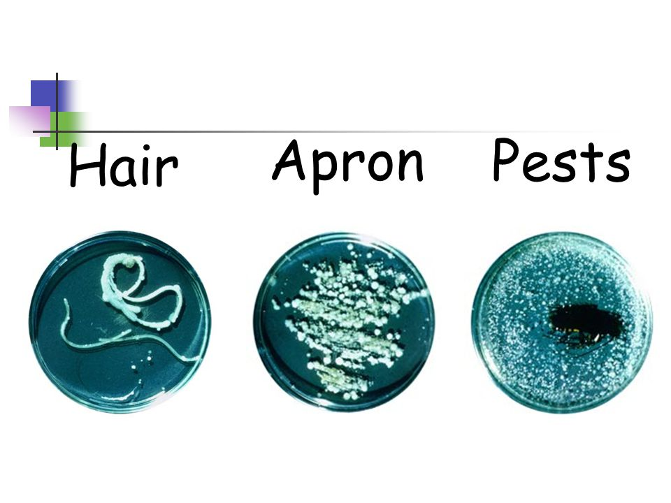 Hair Apron Pests