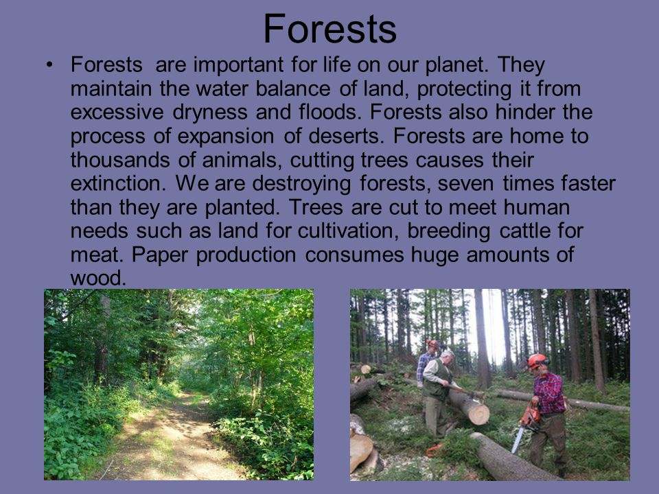 Forests Forests are important for life on our planet.