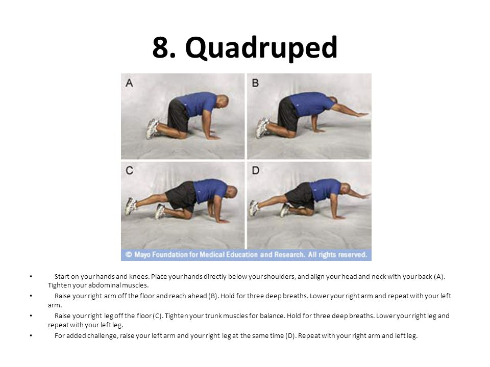 8. Quadruped Start on your hands and knees. Place your hands directly below your shoulders, and align your head and neck with your back (A). Tighten y