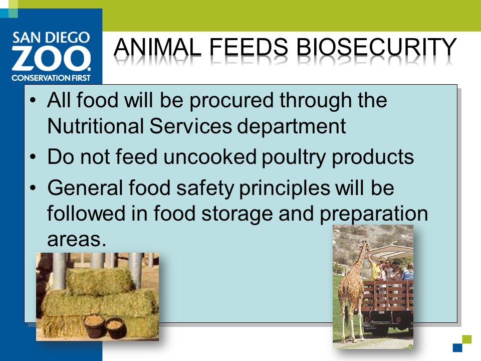 All food will be procured through the Nutritional Services department Do not feed uncooked poultry products General food safety principles will be followed in food storage and preparation areas.