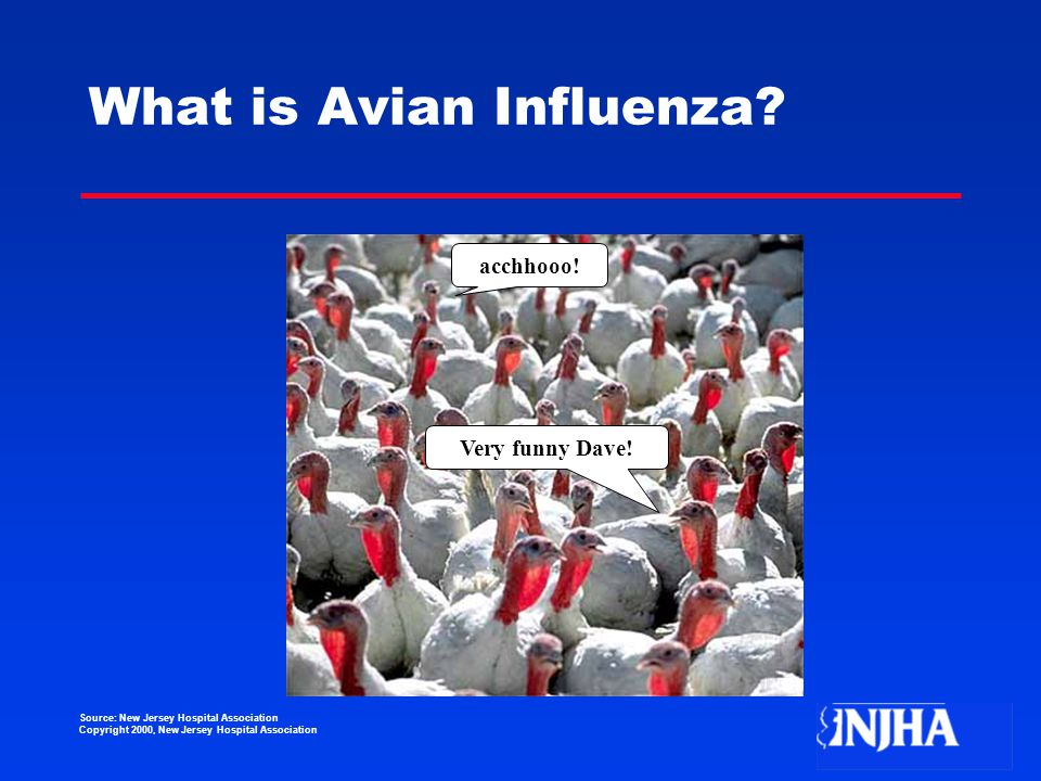 Source: New Jersey Hospital Association Copyright 2000, New Jersey Hospital Association What is Avian Influenza.